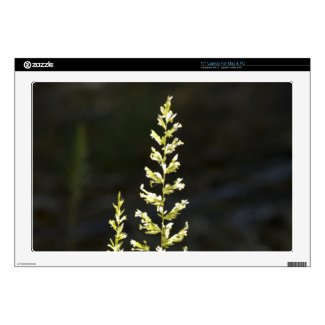 """Green Plant Decal For 17"""" Laptop"""