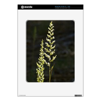 Green Plant Decal For The Ipad