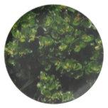 Green Plant Dinner Plate