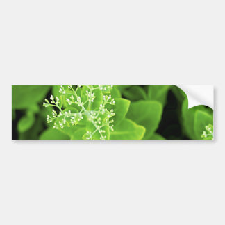 Green plant extravaganza bumper sticker