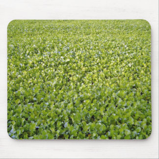 Green Plant Field Texture Mouse Pad
