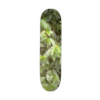 Green plant leaf skate board