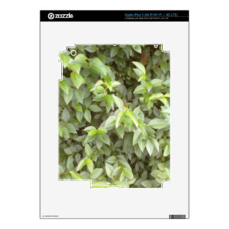 Green plant leaf decal for iPad 3