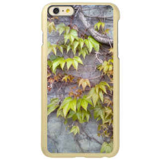Green plant on a stone wall incipio feather® shine iPhone 6 plus case