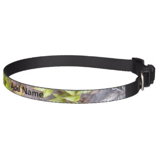 Green plant on a stone wall pet collar