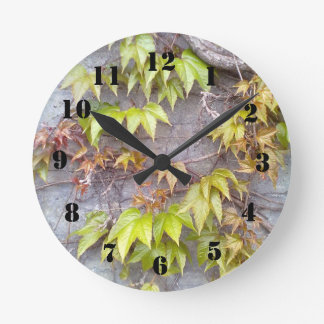 Green plant on a stone wall round clock