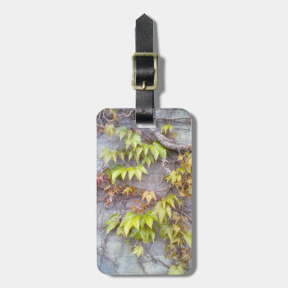 Green plant on a stone wall tag for luggage