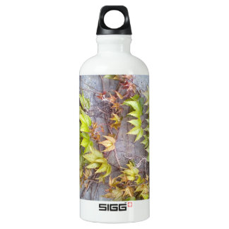 Green plant on a stone wall water bottle