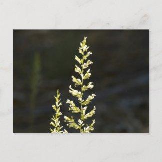 Green Plant Postcards