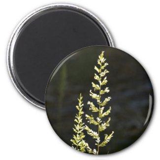 Green Plant Refrigerator Magnet