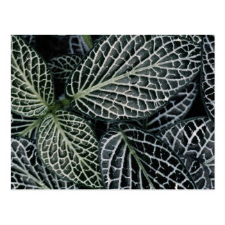 Green plant texture postcard