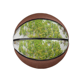 Green plants at the beach basketball