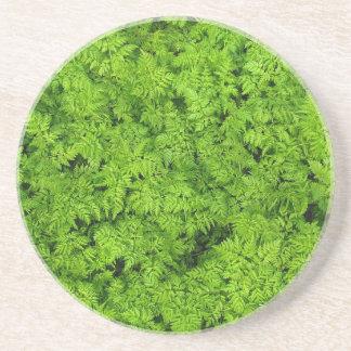 Green Plants Fern Foliage Texture Background Coaster