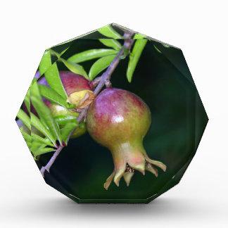 Green pomegranate fruit acrylic award