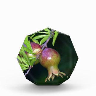 Green pomegranate fruit award