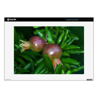 """Green pomegranate fruit (Punica granatum) Decal For 15"""" Laptop"""