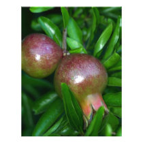 Green pomegranate fruit (Punica granatum) Letterhead