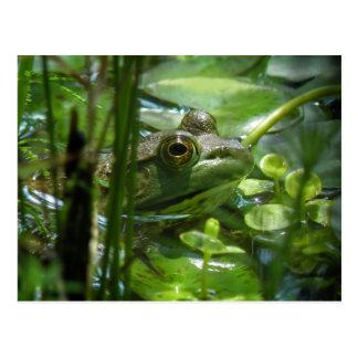 Green Pond Frog Postcard
