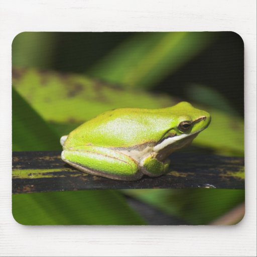 Green Reed Frog Mouse Pad