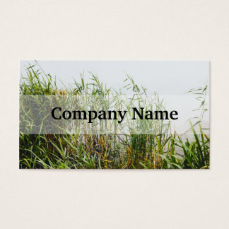 Green Reed, Grey Lake Background, Nature Business Card