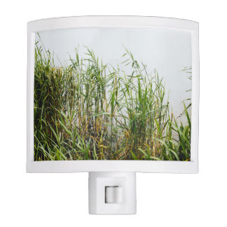 Green Reed, Grey Lake Background, Nature Night Light