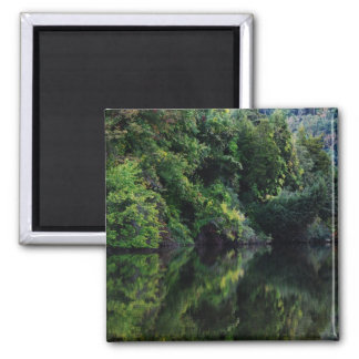 Green Reflections... 2 Inch Square Magnet