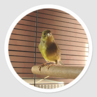 Green roller Canary Stickers