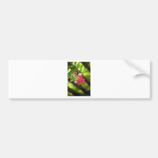 Green Roof- Beautiful flowers Bumper Sticker
