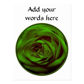 Green Rose Postcard