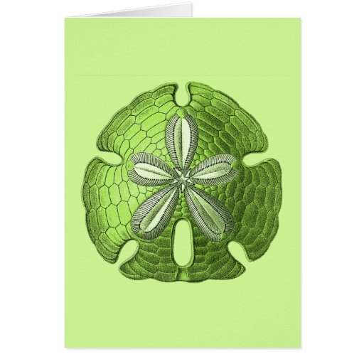 Green Sand Dollar Greeting Cards