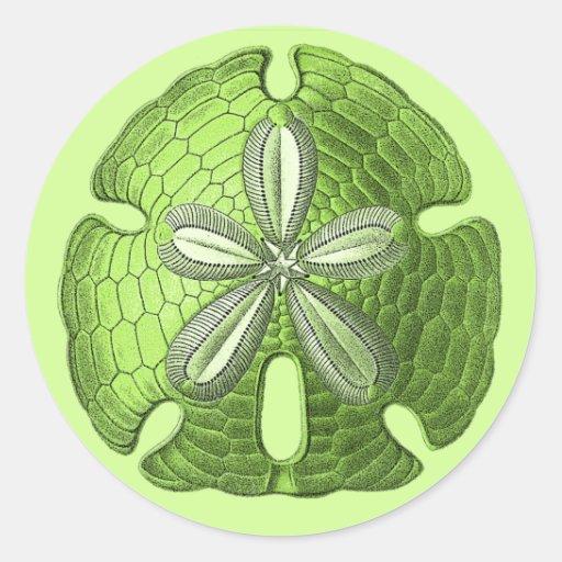 Green Sand Dollar Round Sticker