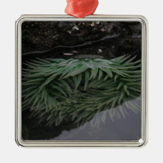 Green Sea Anemone Metal Ornament