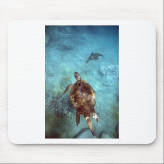Green sea turtle and sea lion underwater Galapagos Mouse Pad