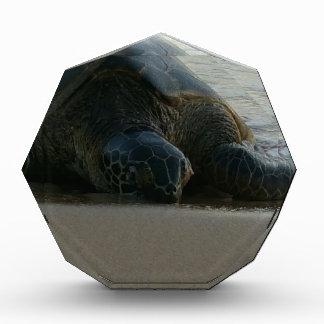 Green Sea Turtle Award