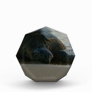 Green Sea Turtle Acrylic Award