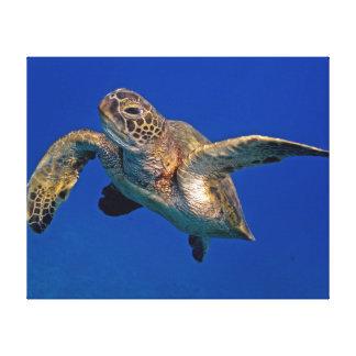 Green Sea Turtle Canvas Prints