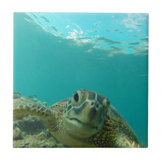 Green Sea Turtle Ceramic Tile