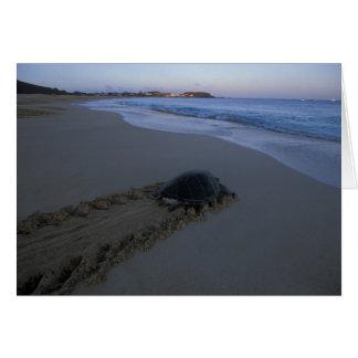Green Sea Turtle, (Chelonia mydas) female Card