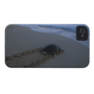 Green Sea Turtle, (Chelonia mydas) female iPhone 4 Cover