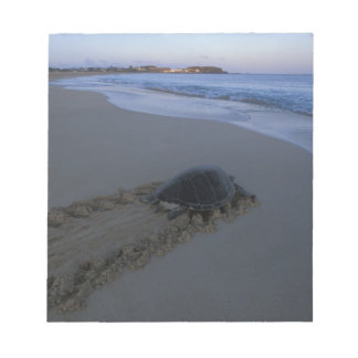 Green Sea Turtle, (Chelonia mydas) female Notepad