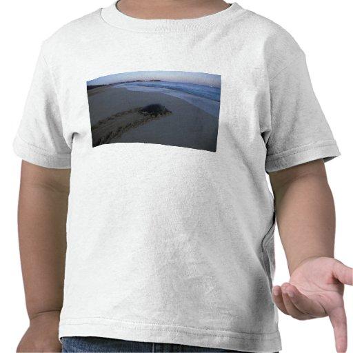 Green Sea Turtle, (Chelonia mydas) female T Shirt