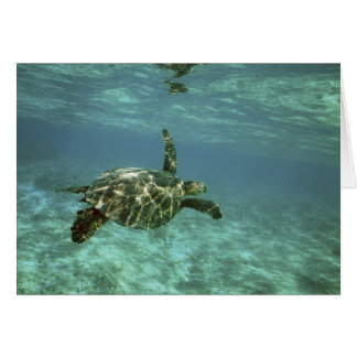 Green Sea Turtle, (Chelonia mydas), Kona Coast, Card