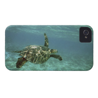 Green Sea Turtle, (Chelonia mydas), Kona Coast, iPhone 4 Cover