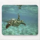Green Sea Turtle, (Chelonia mydas), Kona Coast, Mouse Pad