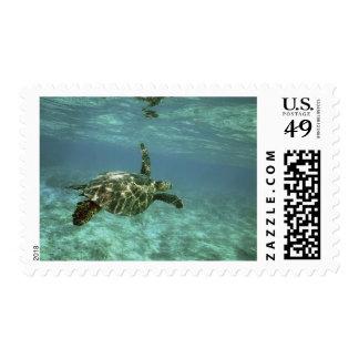Green Sea Turtle Chelonia mydas Kona Coast Stamp