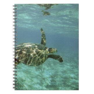 Green Sea Turtle, (Chelonia mydas), Kona Coast, Spiral Notebook