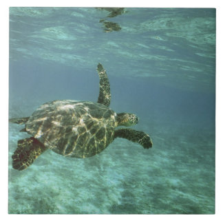 Green Sea Turtle, (Chelonia mydas), Kona Coast, Tile