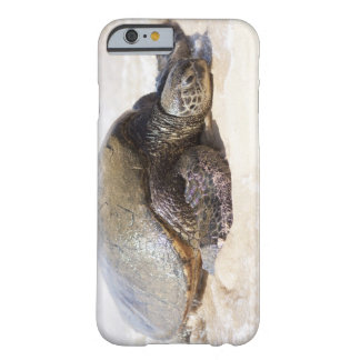 Green sea turtle Chelonia mydas) on the beach in Barely There iPhone 6 Case