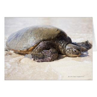 Green sea turtle Chelonia mydas) on the beach in Card