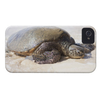 Green sea turtle Chelonia mydas) on the beach in iPhone 4 Case-Mate Case